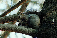 樹上のエゾリス